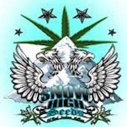 snow high seeds - Devils Poison: Durban Poison Bx (Durban Poison x Devils  Tit)